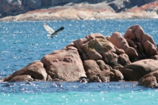 Ein Foto mit dem Titel: Freycinet National Park ©Tourism Australia Wineglass Bay Cruises